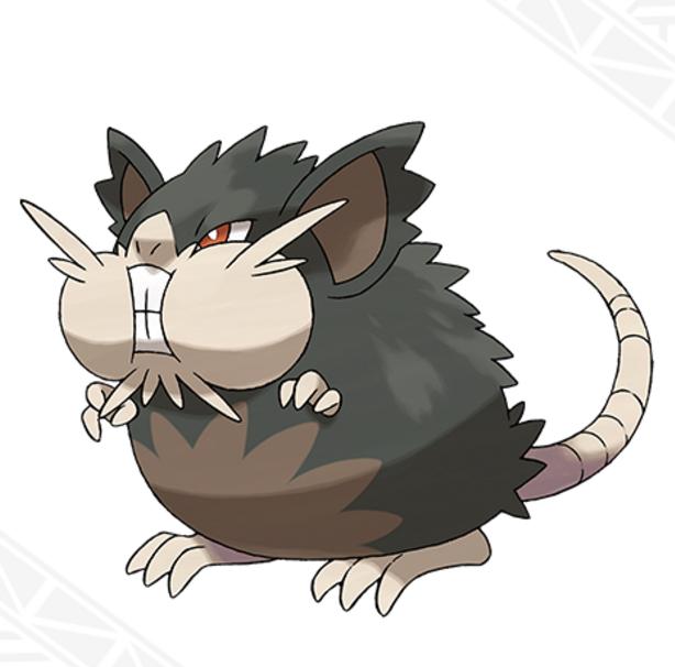 pokemon sun -Alolan-Raticate